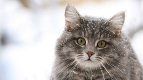 cat_160